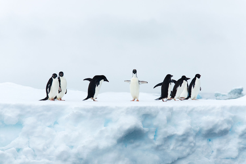 Dinosaurs of Antarctica: Present Day
